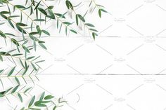 Frame made of eucalyptus branches. Flat lay, top view This item includes 1 JPEG file License terms: More floral photos: Green Leaves, Plant Leaves, Christmas Graphic Design, Eucalyptus Branches, Website Images, Top View, Floral, Flowers, Illustration