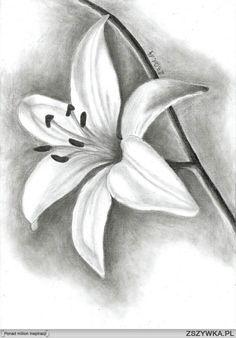 szkice kwiatów - Szukaj w Google