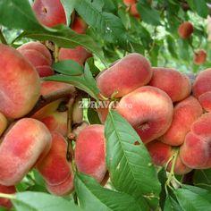Filip | Zdravăn Garden Design, Fruit, Spring, Gardening, Black Magic, Raw Vegan, Peaches, Trees, Vegetables