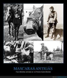 MASCARAS ANTIGÁS - Para diferentes animales en  la Primera Guerra Mundial   Gracias a http://www.cuantarazon.com/   Si quieres leer la noticia completa visita: http://www.estoy-aburrido.com/mascaras-antigas-para-diferentes-animales-en-la-primera-guerra-mundial/