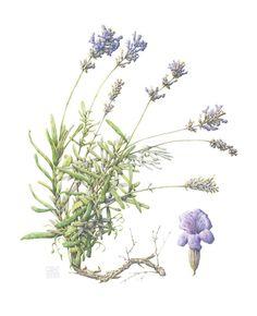 Rocky Mountain of Artists Society Botânico: Julho de 2011
