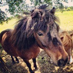 Mini horse #mandolin #photography #animals