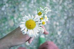 bouquet de rivière mbd