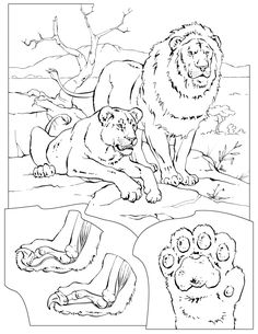 Mammals Book Four Coloring Pages Animal Coloring Pages For Kids