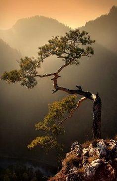 amazing trees