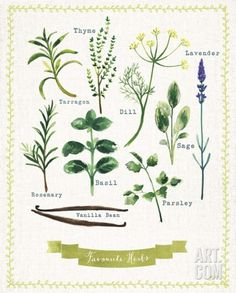 Favourite Herbs Art Print by Bella Dos Santos at Art.com
