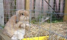 The Free-Range Outdoor Rabbit | Keeping A Bunny Out of Its Cage