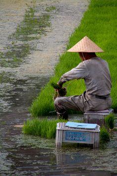 繰り返す春 Rice planting, Japan