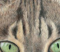 Drawing Fur with Coloured Pencils | Features | Painters Online