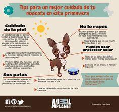 Tips para el cuidado de la piel de tu perro en primavera