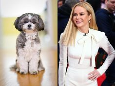 From Samuel L. Jackson to President Putin, hilarious snaps show ... Havanese Grooming, Famous Faces, That Look, Jackson, Cute Animals, Hilarious, Pets, Celebrities, Dresses
