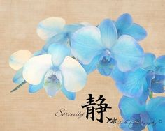 Blue Orchid Serenity Photograph, Fine Art Photograph, Nature Photograph by LMRPhotography, $25.00 USD