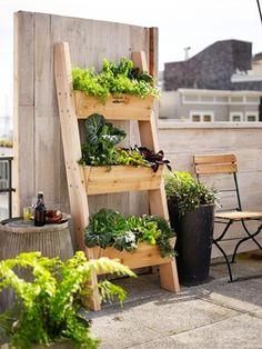 14 ไอเดียปลูกพืชผักและไม้ดอก พื้นที่น้อยก็ทำได้ สำหรับหอพักและคอนโด