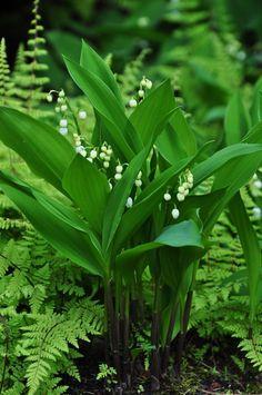 Green beauty...