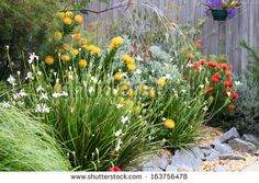 Beautiful Australian Garden Full Native Plants Stock Photo (Edit Now) 163756478 Cottage Garden Plants, Garden Shrubs, Garden Beds, Garden Landscaping, Garden Grass, Rain Garden, Cottage Gardens, Glass Garden, Flowers Garden