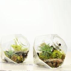 Miniature Air Plant Terrarium// Gem// Home Decor// by PinkSerissa