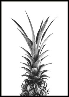 Ananas B & W Poster Pineapple B & W Poster in der Gruppe Prints / Photographs bei Desenio AB Gold Poster, Blue Poster, Wall Collage, Wall Art Prints, Poster Prints, Poster Shop, Wall Posters, Music Posters, Buy Posters Online