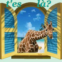 girafe tu es là?