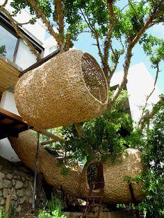 ...human nest