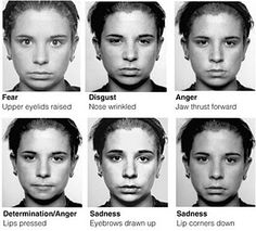 Risultati immagini per facial expressions Facial Action Coding System, Reading Body Language, Nlp Techniques, Face Reading, How To Read People, Lie To Me, Face Expressions, Human Emotions, Emotional Intelligence