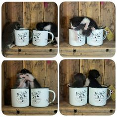 Estos dos elementos se salvaron gracias a la Asociación 2º oportunidad. Onda. Sus tazas solidarias las puedes encontrar en nuestra tienda online. El beneficio es para ellos. #RETROPOT www.retropot.es #vintage #taza #mug #enamelmug #camping #camplife #retro #retropot #pot #peltre #coffee #tea #vintagemug #cup #deco #montaña #naturaleza #outdoor #gato #cute