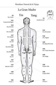 Free acupuncture point diagram using acupuncture points to urinary bladder n meridian ecan international school of acupuncture learn acupuncture in india ccuart Image collections
