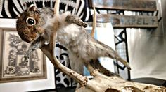 Check out this item in my Etsy shop https://www.etsy.com/listing/490447177/vintage-grey-squirrel-taxidermy-mount