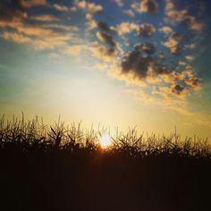 Guten morgen Sonne