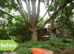 Before & After: A Backyard Ventures from Chaos to Calm Garden Makeover, Old Trees, Outdoor Rooms, Weed, Landscaping, Bench, Backyard, Gardening, Projects
