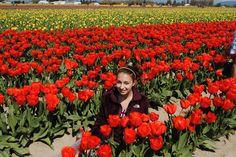 in the tulip fields