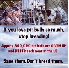 Thousands of pitbulls are killed every single day in shelters because no one is adopting them. If you love pitbulls, you DO NOT BREED THEM!!!!