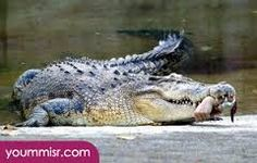 Image result for dangerous animals in australia