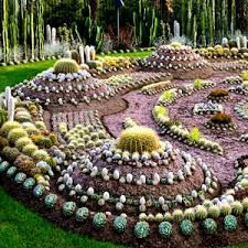 Cactus Garden Ideas 56 best cactus garden ideas images on pinterest Image Result For Cactus Garden Ideas