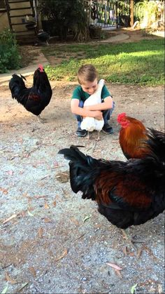 Chicken Runs to Her Boy for a Hug, but Beaks Out Over His Haircut http://www.visiontimes.com/2015/05/20/chicken-runs-to-her-boy-for-a-hug-but-beaks-out-over-his-haircut.html