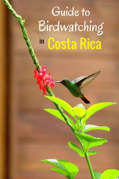 Guide to birdwatching in Costa Rica - find out when and where to see toucans, hummingbirds, macaws and other birds