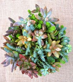 Succulent Dish Garden- hardware store re-purpose - My Soulful Home