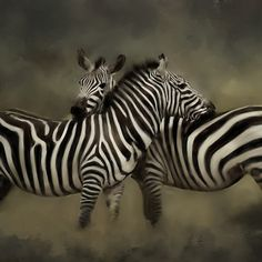 'Zebra Love' by JasonVine Framed Prints, Canvas Prints, Art Prints, Love S, Laptop Skin, Laptop Sleeves, Animals, Design, Art Impressions
