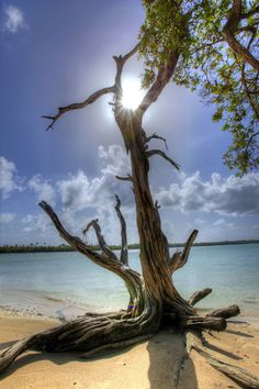 There's something about an oddly shaped tree or a piece of drift wood that makes a nice private place, lots of these in paradise I hope