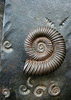 """doorknob""...nic westermann...artist blacksmith....tyntesfield..bristol,  England"