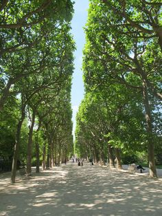 Le Jardin des Plantes in the 5th district is a well kept local secret--this gorgeous park is a great place to have a scenic stroll away from the crowds.