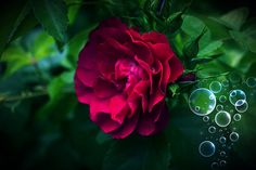Flowers photos (1,268,144 free images)