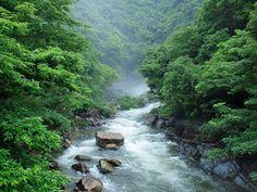 Yakushima is Spirit manifested - J