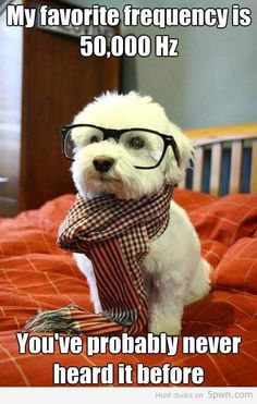 """A little """"audiology humor"""" to keep my smiling and laughing throughout the day. Introducing you to hipster dog #mydayinstitchfix"""