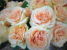 Peach Finesse Roses: all year  $$