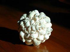 White gastropod shell orb -- 10cm