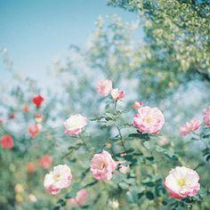 Hoa nở trong vườn