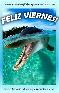 BUEN FINDE PARA TODOS!!! http://acuariosyestanquesacuatica.com/
