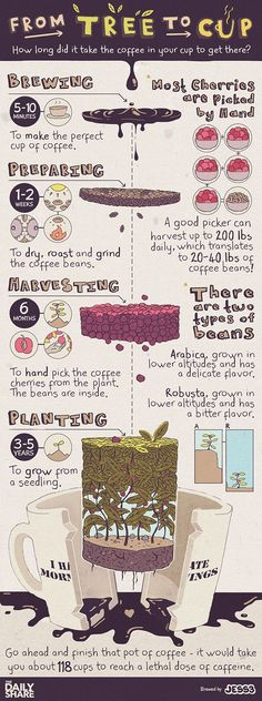 #Coffee : From Tree to Cup   #Infographic