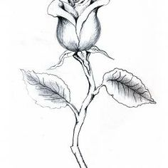 Rose With Stem Drawing Rosebud with stem