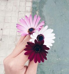 flores discovered by Paty Hinojo on We Heart It